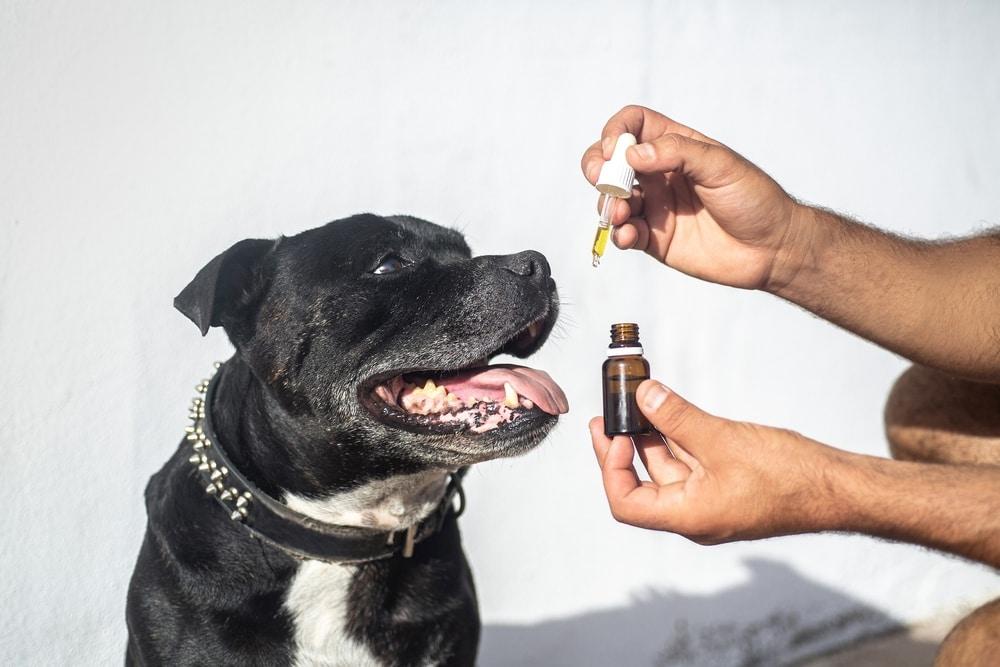 CBD_Oil_for_Pets