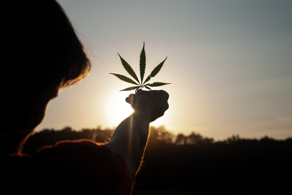 Person holding up cannabis leaf during sunset